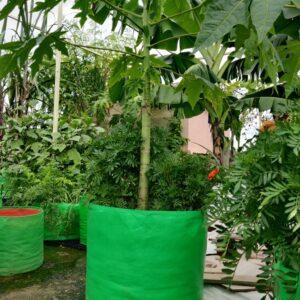 HDPE Grow Bag 18 X 18 Inch