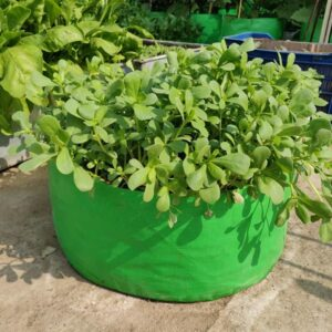 """HDPE Grow Bag (24″ X 9"""") For Leafy Green Vegetables (Pack of 2)"""