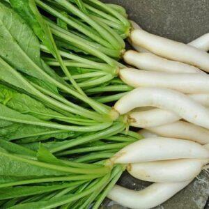 Radish Seeds White Long