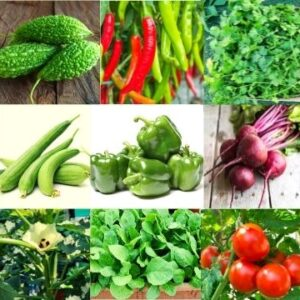 Rainy Season Vegetable Seeds Kit