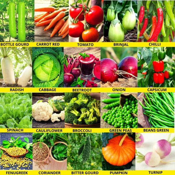 Winter Season Vegetables Seeds Kit