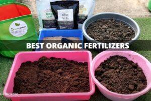 महत्वपूर्ण जैविक उर्वरक और उनका एनपीके अनुपात – Best organic fertilizers and their NPK ratio in Hindi
