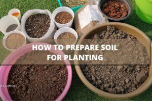 पौधों के लिए गमले की मिट्टी कैसे तैयार करें - How to Prepare Soil For Planting in Hindi