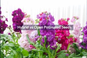 हाइब्रिड और ओपन पोलिनेटेड सीड में अंतर और उनके लाभ - Difference between Hybrid and Open-Pollinated Seeds and benefits in Hindi