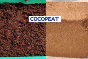 गार्डनिंग के लिए कोकोपीट के लाभ और सम्पूर्ण जानकारी - Cocopeat for plants in Hindi