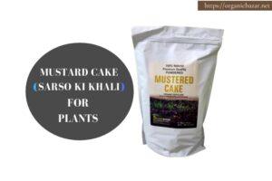 सरसों खली या मस्टर्ड केक के फायदे, जो गार्डनिंग को बनाए बेहतर - Mustard cake (sarson ki khali) benefits for plants in Hindi
